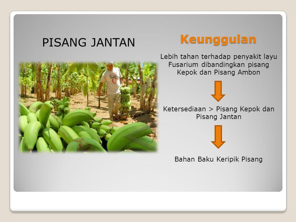 Keunggulan Lebih tahan terhadap penyakit layu Fusarium dibandingkan pisang Kepok dan Pisang Ambon Ketersediaan > Pisang Kepok dan Pisang Jantan Bahan Baku Keripik Pisang PISANG JANTAN