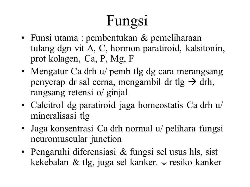Fungsi Funsi utama : pembentukan & pemeliharaan tulang dgn vit A, C, hormon paratiroid, kalsitonin, prot kolagen, Ca, P, Mg, F Mengatur Ca drh u/ pemb
