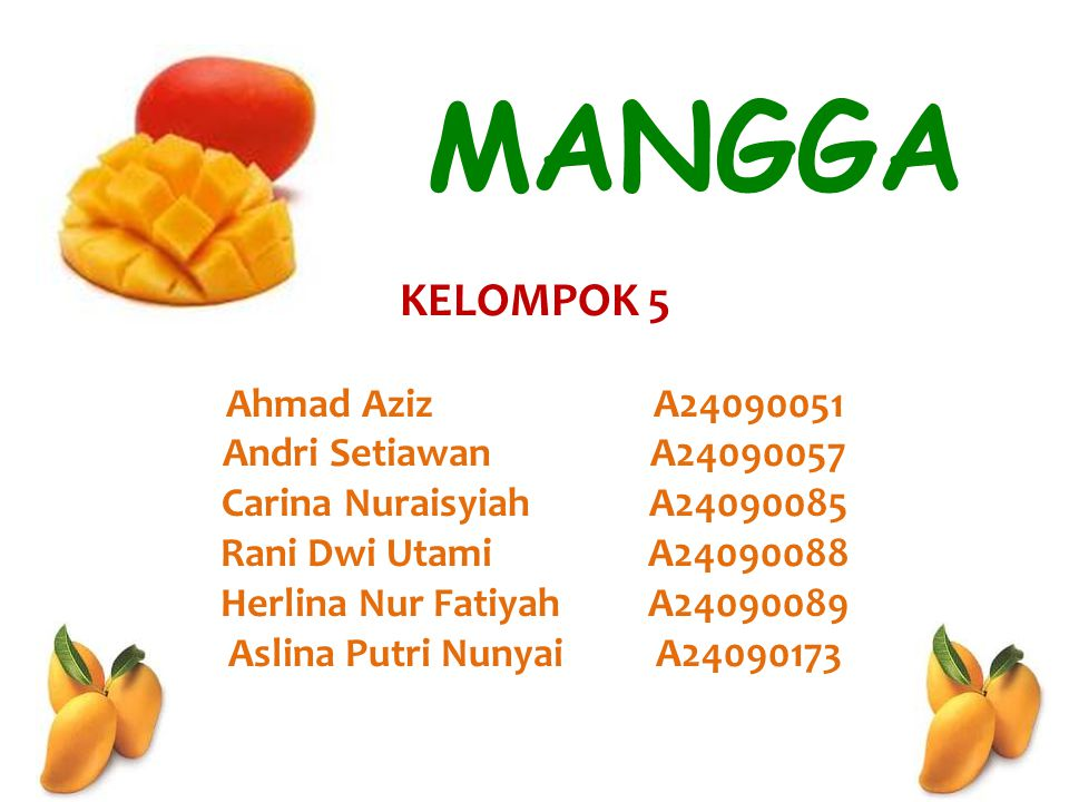 PENDAHULUAN O Mangga : salah satu jenis buah tropika yang sangat digemari oleh masyarakat dari semua kalangan.