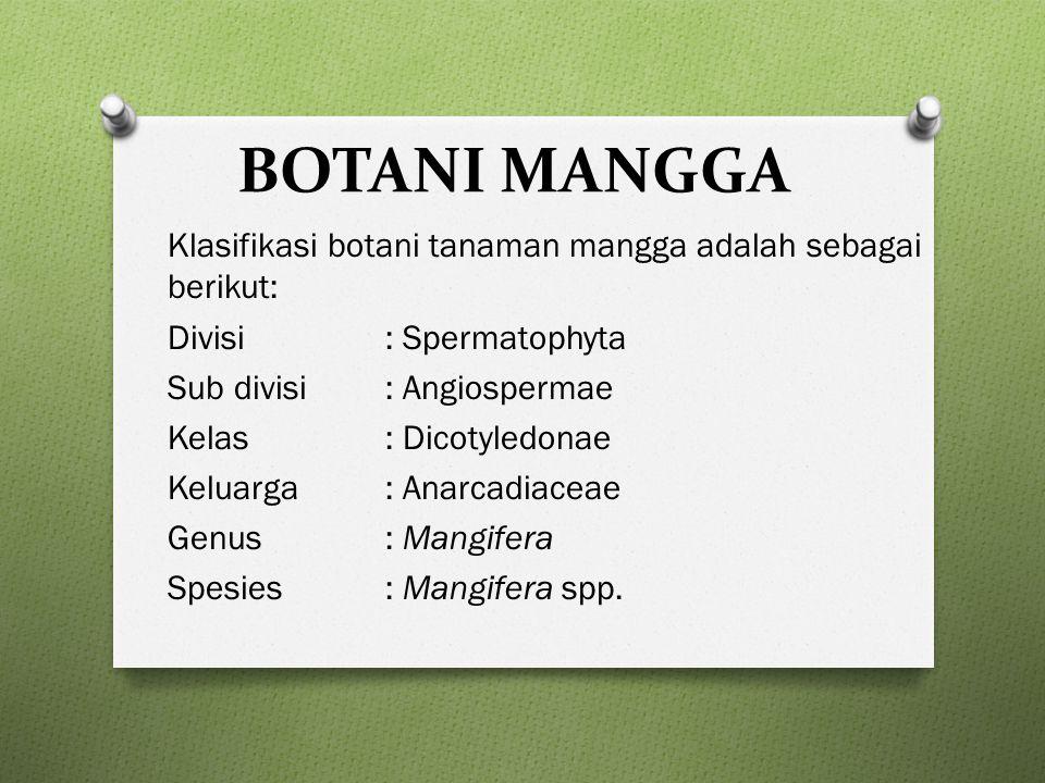 Jenis mangga di Indonesia Mangifera indica L.