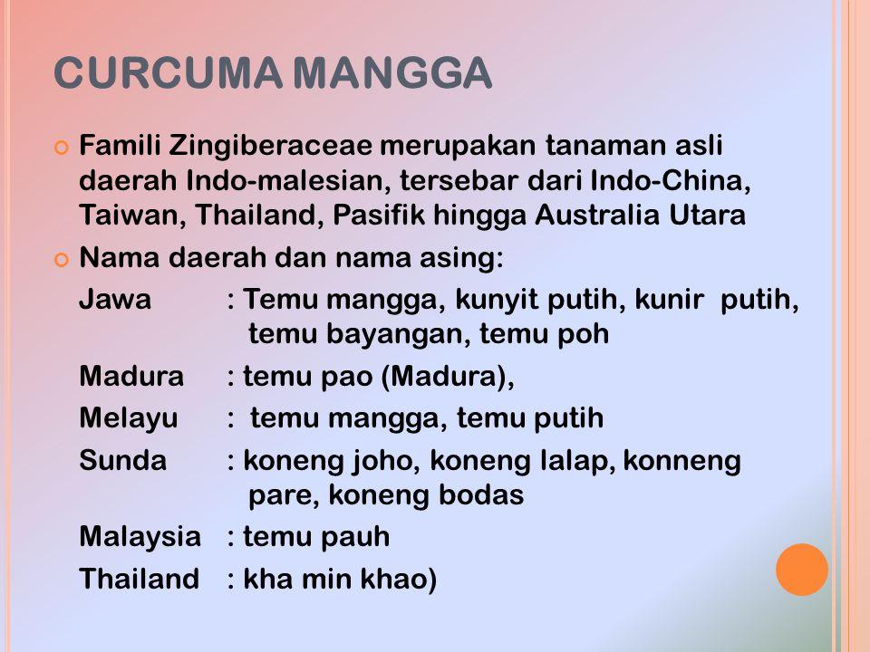 CURCUMA MANGGA Famili Zingiberaceae merupakan tanaman asli daerah Indo-malesian, tersebar dari Indo-China, Taiwan, Thailand, Pasifik hingga Australia