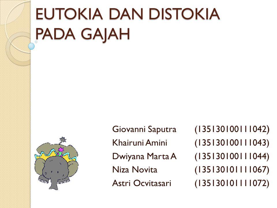 EUTOKIA DAN DISTOKIA PADA GAJAH Giovanni Saputra(135130100111042 ) Khairuni Amini(135130100111043) Dwiyana Marta A(135130100111044) Niza Novita(135130