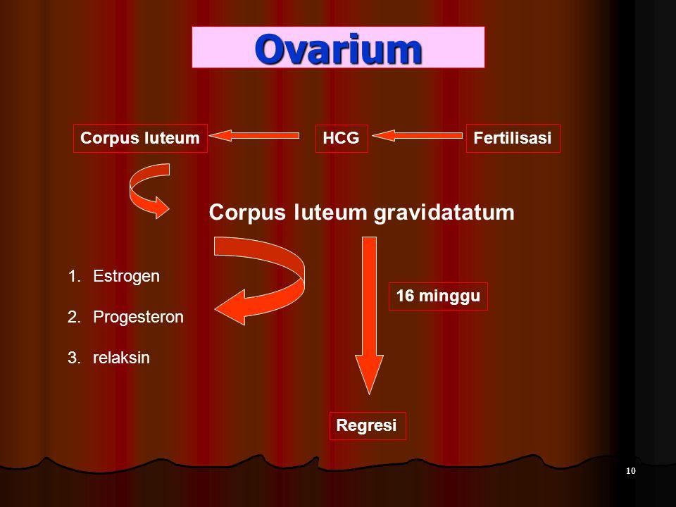 Ovarium HCG Corpus luteum Corpus luteum gravidatatum Fertilisasi 1.Estrogen 2.Progesteron 3.relaksin Regresi 16 minggu 10