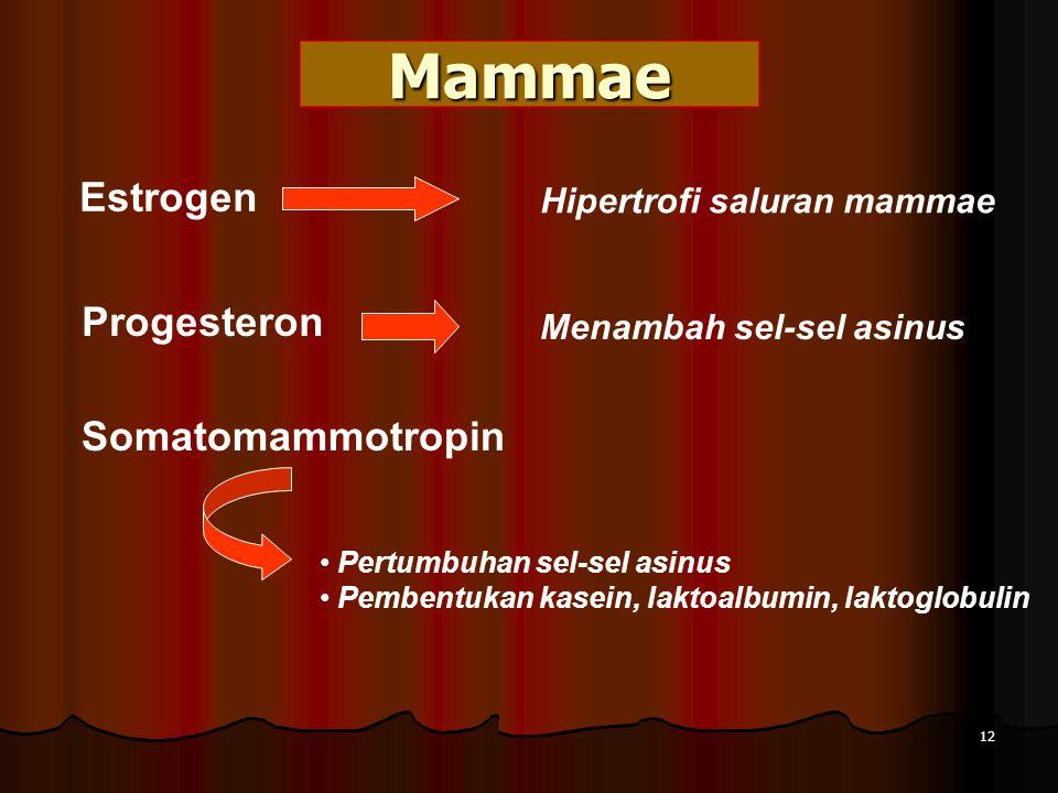 Mammae Estrogen Hipertrofi saluran mammae Progesteron Menambah sel-sel asinus Somatomammotropin Pertumbuhan sel-sel asinus Pembentukan kasein, laktoalbumin, laktoglobulin 12