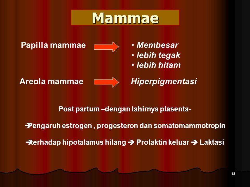 Mammae Papilla mammae Membesar lebih tegak lebih hitam Areola mammaeHiperpigmentasi Post partum –dengan lahirnya plasenta-  Pengaruh estrogen, progesteron dan somatomammotropin  terhadap hipotalamus hilang  Prolaktin keluar  Laktasi 13