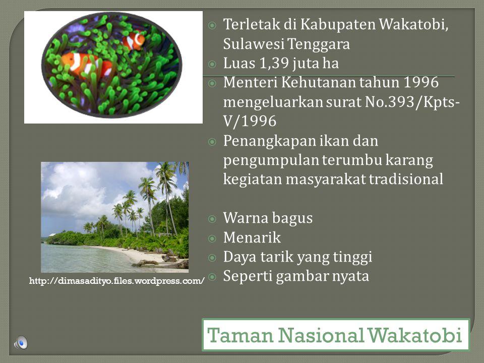  Terletak di Kabupaten Wakatobi, Sulawesi Tenggara  Luas 1,39 juta ha  Menteri Kehutanan tahun 1996 mengeluarkan surat No.393/Kpts- V/1996  Penangkapan ikan dan pengumpulan terumbu karang kegiatan masyarakat tradisional  Warna bagus  Menarik  Daya tarik yang tinggi  Seperti gambar nyata http://dimasadityo.files.wordpress.com/ Taman Nasional Wakatobi