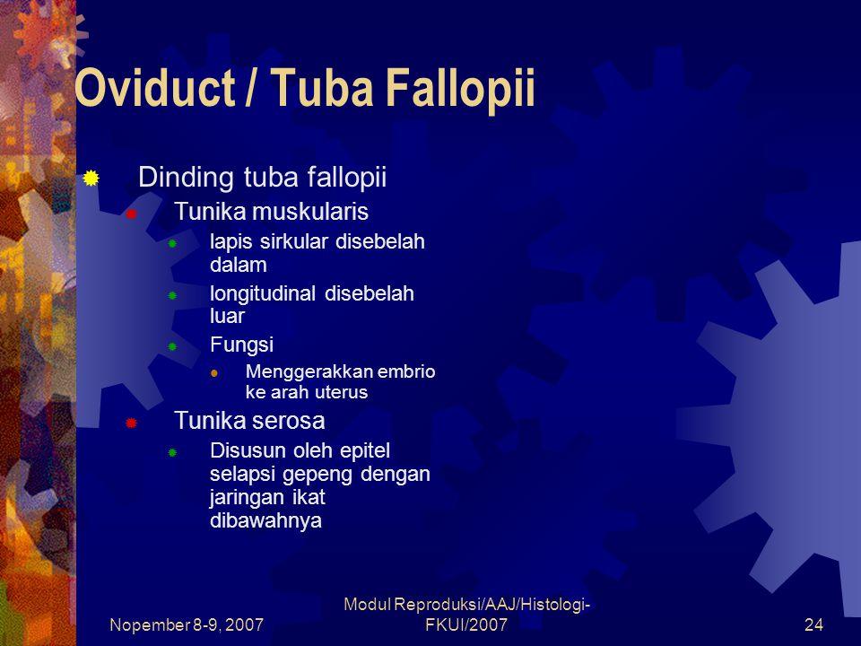 Nopember 8-9, 2007 Modul Reproduksi/AAJ/Histologi- FKUI/200724 Oviduct / Tuba Fallopii  Dinding tuba fallopii  Tunika muskularis  lapis sirkular di