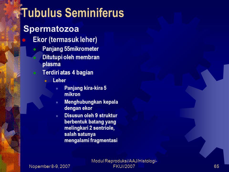 Nopember 8-9, 2007 Modul Reproduksi/AAJ/Histologi- FKUI/200765 Tubulus Seminiferus  Spermatozoa  Ekor (termasuk leher)  Panjang 55mikrometer  Ditutupi oleh membran plasma  Terdiri atas 4 bagian Leher Panjang kira-kira 5 mikron Menghubungkan kepala dengan ekor Disusun oleh 9 struktur berbentuk batang yang melingkari 2 sentriole, salah satunya mengalami fragmentasi