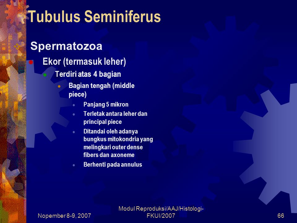 Nopember 8-9, 2007 Modul Reproduksi/AAJ/Histologi- FKUI/200766 Tubulus Seminiferus  Spermatozoa  Ekor (termasuk leher)  Terdiri atas 4 bagian Bagia