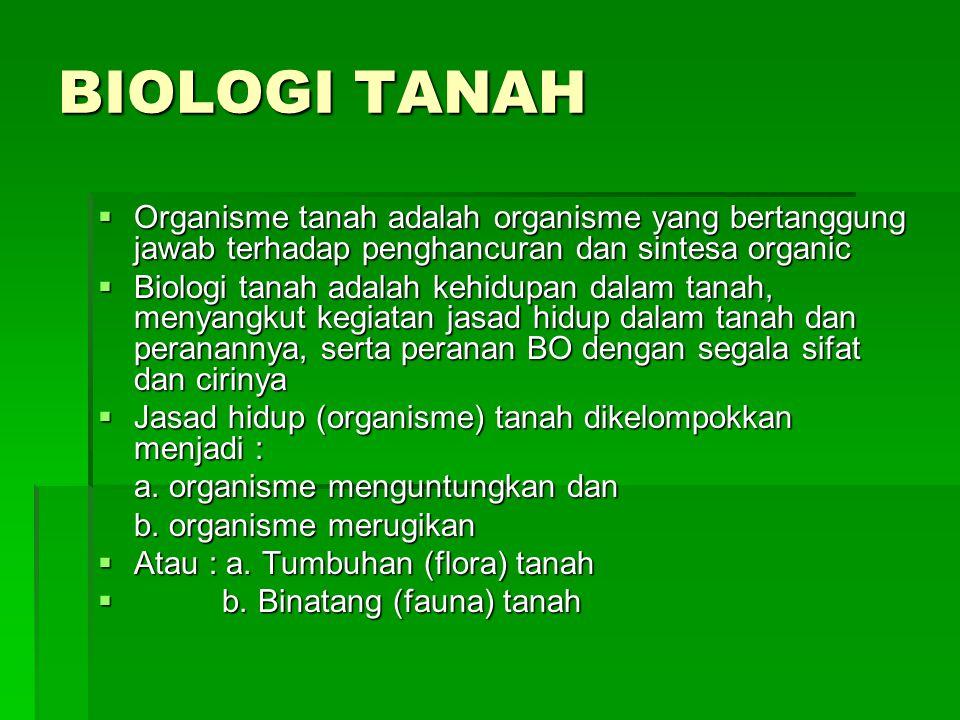 BIOLOGI TANAH  Organisme tanah adalah organisme yang bertanggung jawab terhadap penghancuran dan sintesa organic  Biologi tanah adalah kehidupan dal