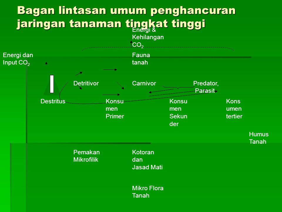 Bagan lintasan umum penghancuran jaringan tanaman tingkat tinggi Energi & Kehilangan CO 2 Energi dan Input CO 2 Fauna tanah DetritivorCarnivorPredator