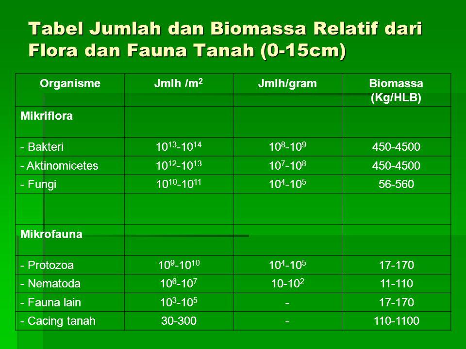Tabel Jumlah dan Biomassa Relatif dari Flora dan Fauna Tanah (0-15cm) OrganismeJmlh /m 2 Jmlh/gramBiomassa (Kg/HLB) Mikriflora - Bakteri10 13 -10 14 10 8 -10 9 450-4500 - Aktinomicetes10 12 -10 13 10 7 -10 8 450-4500 - Fungi10 10 -10 11 10 4 -10 5 56-560 Mikrofauna - Protozoa10 9 -10 10 10 4 -10 5 17-170 - Nematoda10 6 -10 7 10-10 2 11-110 - Fauna lain10 3 -10 5 -17-170 - Cacing tanah30-300-110-1100
