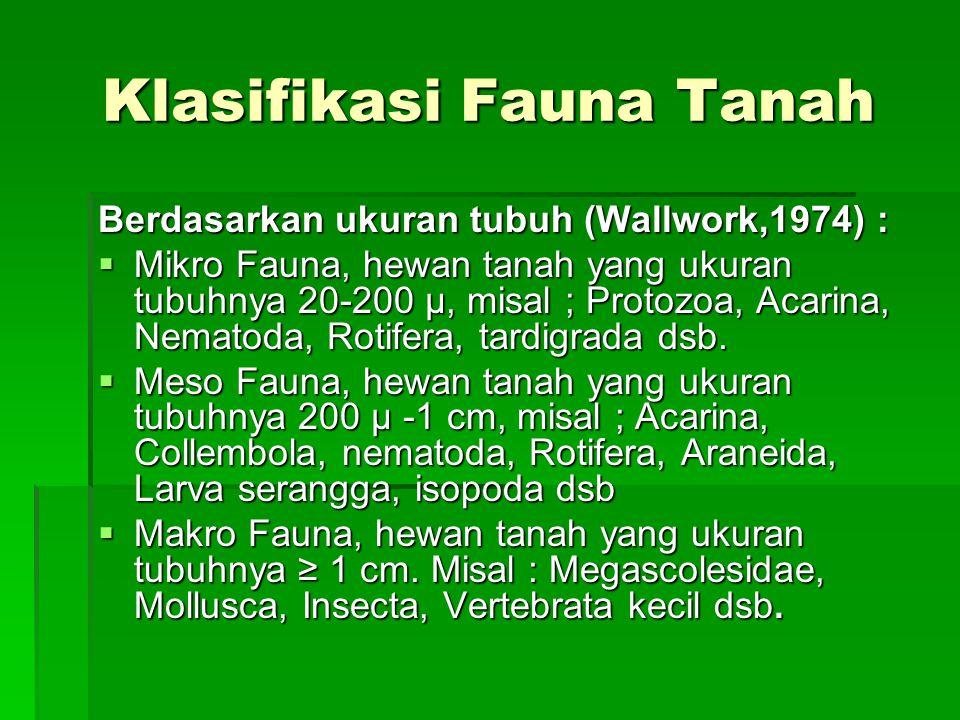 Klasifikasi Fauna Tanah Berdasarkan ukuran tubuh (Wallwork,1974) :  Mikro Fauna, hewan tanah yang ukuran tubuhnya 20-200 μ, misal ; Protozoa, Acarina, Nematoda, Rotifera, tardigrada dsb.