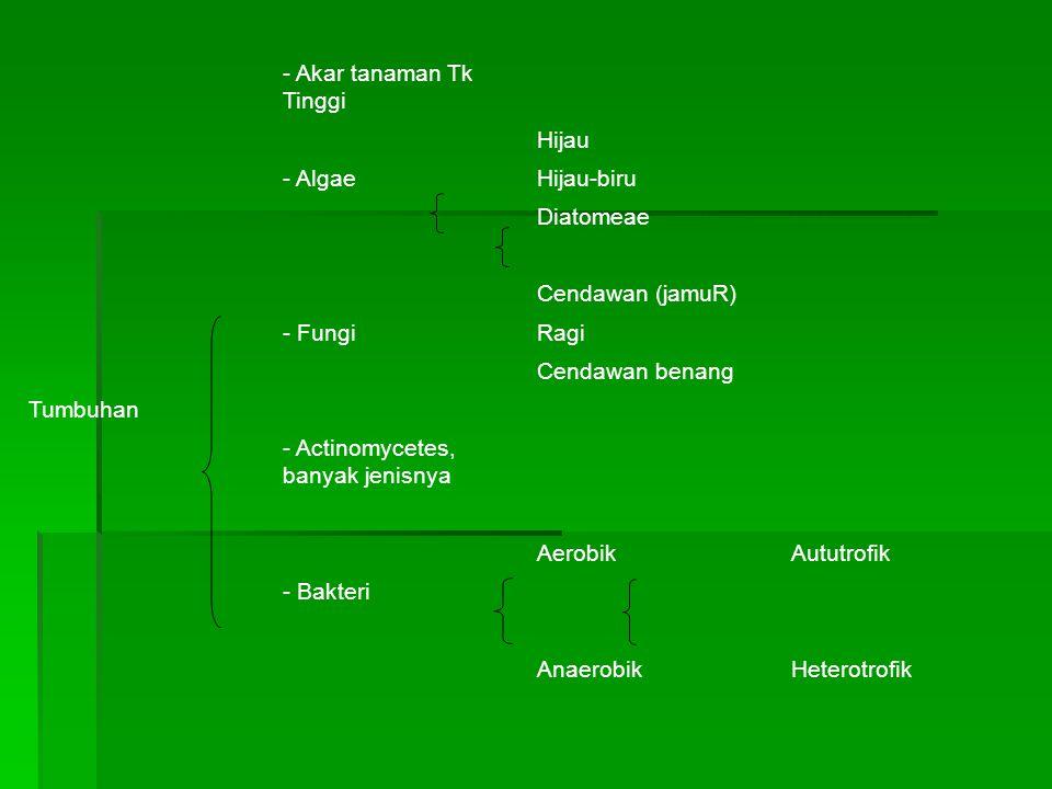 Tumbuhan - Akar tanaman Tk Tinggi Hijau - AlgaeHijau-biru Diatomeae Cendawan (jamuR) - FungiRagi Cendawan benang - Actinomycetes, banyak jenisnya AerobikAututrofik - Bakteri AnaerobikHeterotrofik