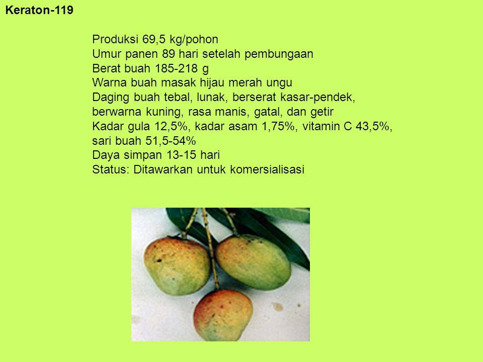 Keraton-119 Produksi 69,5 kg/pohon Umur panen 89 hari setelah pembungaan Berat buah 185-218 g Warna buah masak hijau merah ungu Daging buah tebal, lun