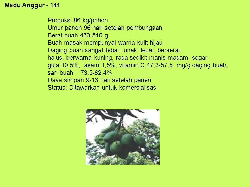 Madu Anggur - 141 Produksi 86 kg/pohon Umur panen 96 hari setelah pembungaan Berat buah 453-510 g Buah masak mempunyai warna kulit hijau Daging buah s