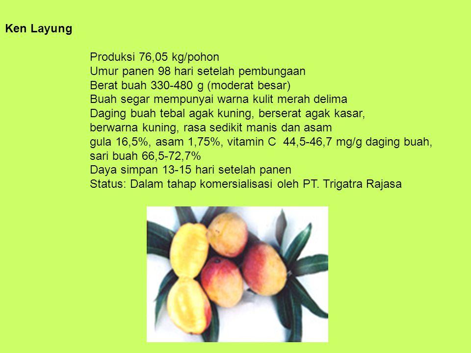 Ken Layung Produksi 76,05 kg/pohon Umur panen 98 hari setelah pembungaan Berat buah 330-480 g (moderat besar) Buah segar mempunyai warna kulit merah delima Daging buah tebal agak kuning, berserat agak kasar, berwarna kuning, rasa sedikit manis dan asam gula 16,5%, asam 1,75%, vitamin C 44,5-46,7 mg/g daging buah, sari buah 66,5-72,7% Daya simpan 13-15 hari setelah panen Status: Dalam tahap komersialisasi oleh PT.