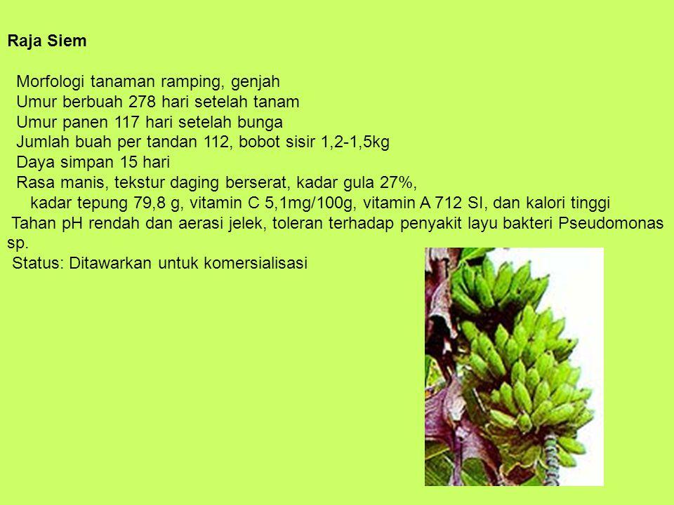 Raja Siem Morfologi tanaman ramping, genjah Umur berbuah 278 hari setelah tanam Umur panen 117 hari setelah bunga Jumlah buah per tandan 112, bobot si