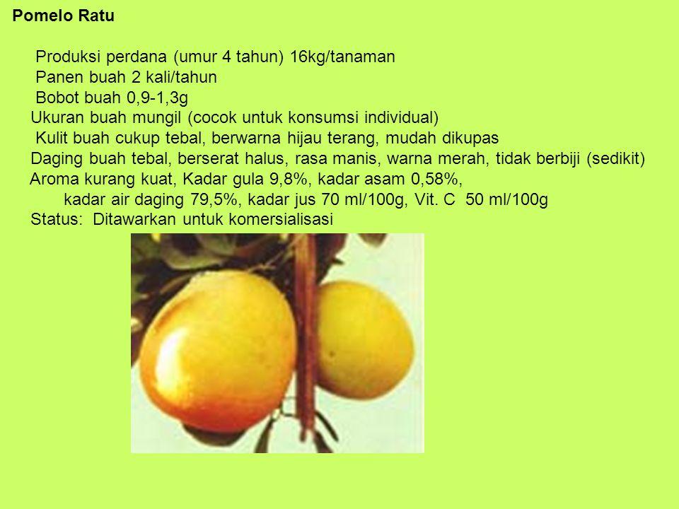 Pomelo Ratu Produksi perdana (umur 4 tahun) 16kg/tanaman Panen buah 2 kali/tahun Bobot buah 0,9-1,3g Ukuran buah mungil (cocok untuk konsumsi individu