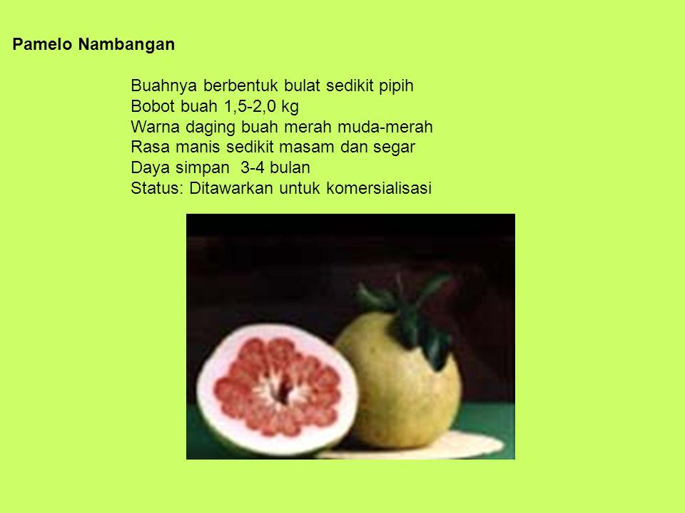 Pamelo Nambangan Buahnya berbentuk bulat sedikit pipih Bobot buah 1,5-2,0 kg Warna daging buah merah muda-merah Rasa manis sedikit masam dan segar Daya simpan 3-4 bulan Status: Ditawarkan untuk komersialisasi
