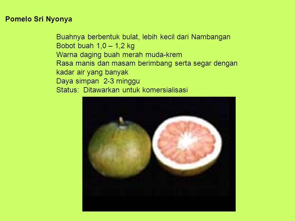 Pomelo Sri Nyonya Buahnya berbentuk bulat, lebih kecil dari Nambangan Bobot buah 1,0 – 1,2 kg Warna daging buah merah muda-krem Rasa manis dan masam berimbang serta segar dengan kadar air yang banyak Daya simpan 2-3 minggu Status: Ditawarkan untuk komersialisasi