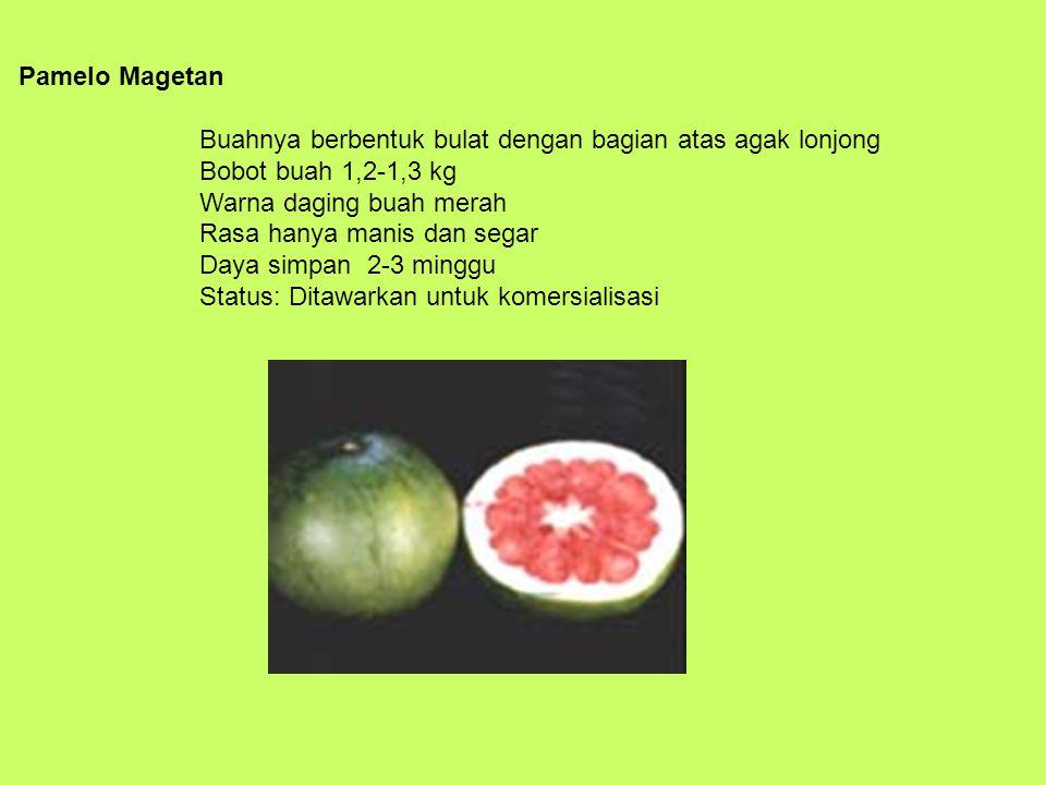 Pamelo Magetan Buahnya berbentuk bulat dengan bagian atas agak lonjong Bobot buah 1,2-1,3 kg Warna daging buah merah Rasa hanya manis dan segar Daya s