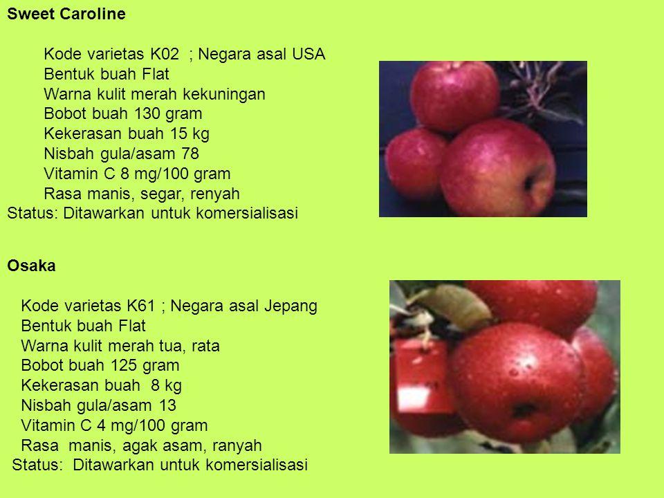 Sweet Caroline Kode varietas K02 ; Negara asal USA Bentuk buah Flat Warna kulit merah kekuningan Bobot buah 130 gram Kekerasan buah 15 kg Nisbah gula/