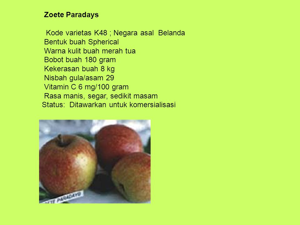 Zoete Paradays Kode varietas K48 ; Negara asal Belanda Bentuk buah Spherical Warna kulit buah merah tua Bobot buah 180 gram Kekerasan buah 8 kg Nisbah