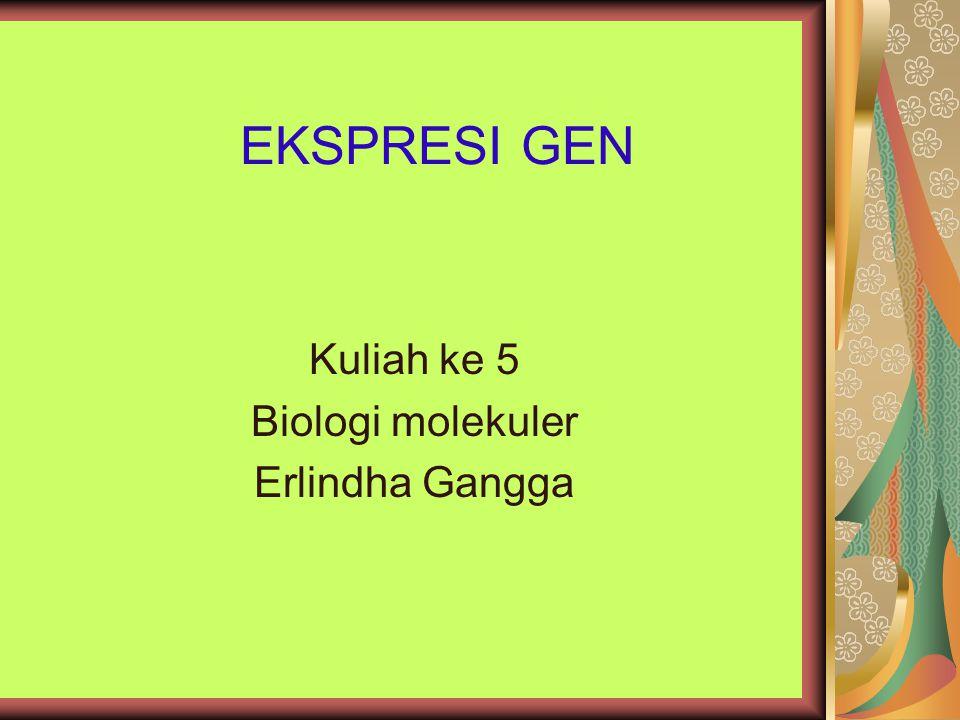 EKSPRESI GEN Kuliah ke 5 Biologi molekuler Erlindha Gangga