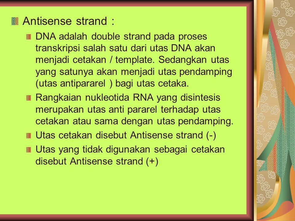 Antisense strand : DNA adalah double strand pada proses transkripsi salah satu dari utas DNA akan menjadi cetakan / template. Sedangkan utas yang satu