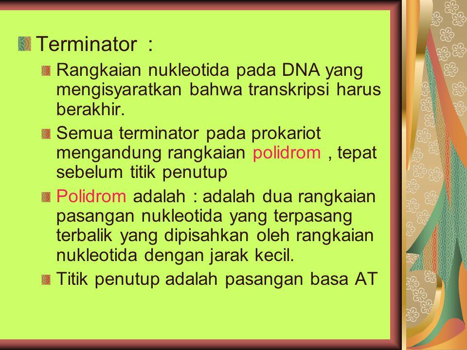 Terminator : Rangkaian nukleotida pada DNA yang mengisyaratkan bahwa transkripsi harus berakhir. Semua terminator pada prokariot mengandung rangkaian