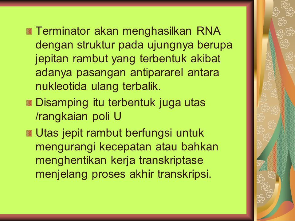Terminator akan menghasilkan RNA dengan struktur pada ujungnya berupa jepitan rambut yang terbentuk akibat adanya pasangan antipararel antara nukleoti