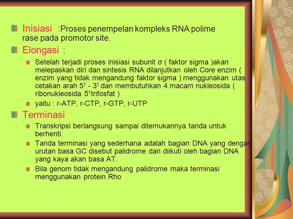 Inisiasi : Proses penempelan kompleks RNA polime rase pada promotor site. Elongasi : Setelah terjadi proses inisiasi subunit σ ( faktor sigma )akan me