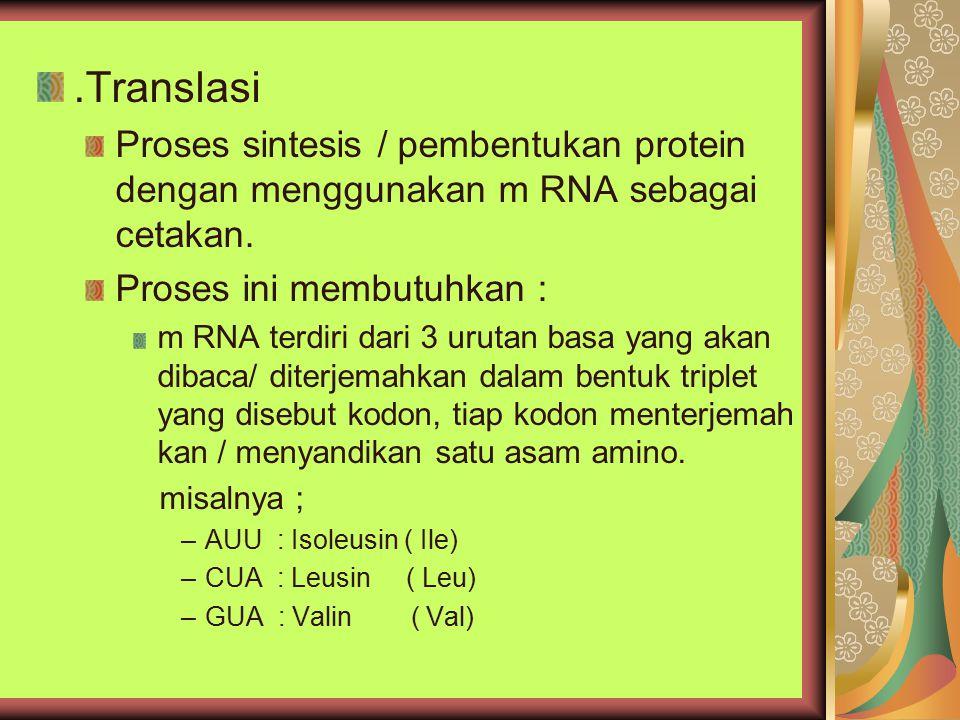 .Translasi Proses sintesis / pembentukan protein dengan menggunakan m RNA sebagai cetakan. Proses ini membutuhkan : m RNA terdiri dari 3 urutan basa y