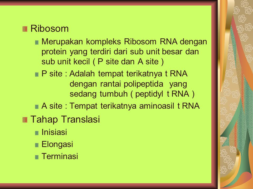 Ribosom Merupakan kompleks Ribosom RNA dengan protein yang terdiri dari sub unit besar dan sub unit kecil ( P site dan A site ) P site : Adalah tempat