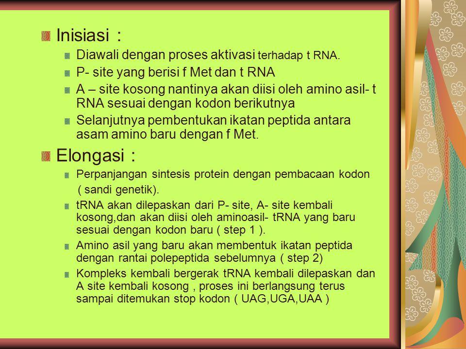 Inisiasi : Diawali dengan proses aktivasi terhadap t RNA. P- site yang berisi f Met dan t RNA A – site kosong nantinya akan diisi oleh amino asil- t R