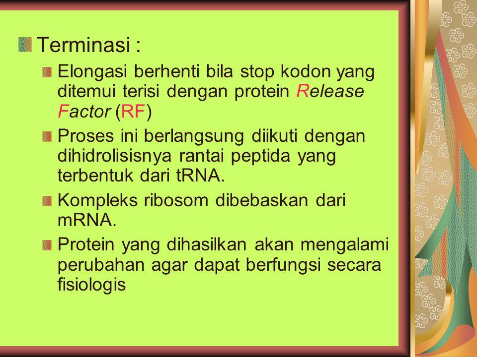 Terminasi : Elongasi berhenti bila stop kodon yang ditemui terisi dengan protein Release Factor (RF) Proses ini berlangsung diikuti dengan dihidrolisisnya rantai peptida yang terbentuk dari tRNA.