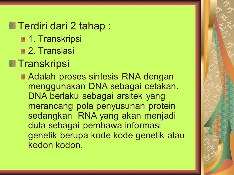 Terdiri dari 2 tahap : 1. Transkripsi 2. Translasi Transkripsi Adalah proses sintesis RNA dengan menggunakan DNA sebagai cetakan. DNA berlaku sebagai