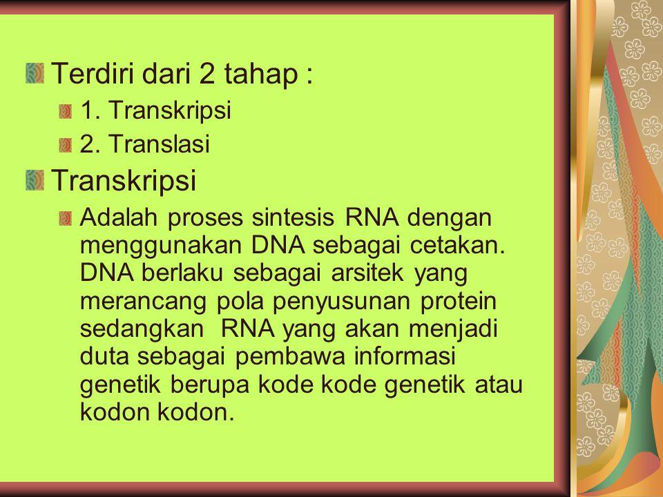 Ribosom Merupakan kompleks Ribosom RNA dengan protein yang terdiri dari sub unit besar dan sub unit kecil ( P site dan A site ) P site : Adalah tempat terikatnya t RNA dengan rantai polipeptida yang sedang tumbuh ( peptidyl t RNA ) A site : Tempat terikatnya aminoasil t RNA Tahap Translasi Inisiasi Elongasi Terminasi
