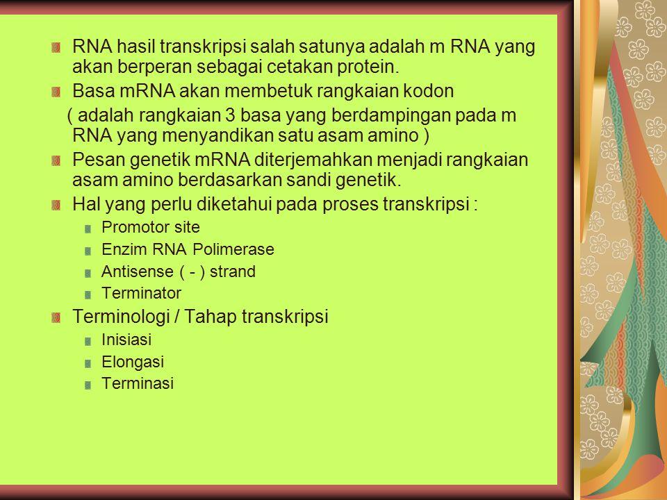 RNA hasil transkripsi salah satunya adalah m RNA yang akan berperan sebagai cetakan protein. Basa mRNA akan membetuk rangkaian kodon ( adalah rangkaia