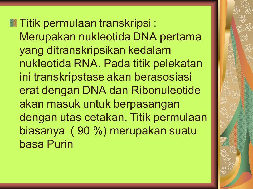 Titik permulaan transkripsi : Merupakan nukleotida DNA pertama yang ditranskripsikan kedalam nukleotida RNA. Pada titik pelekatan ini transkripstase a