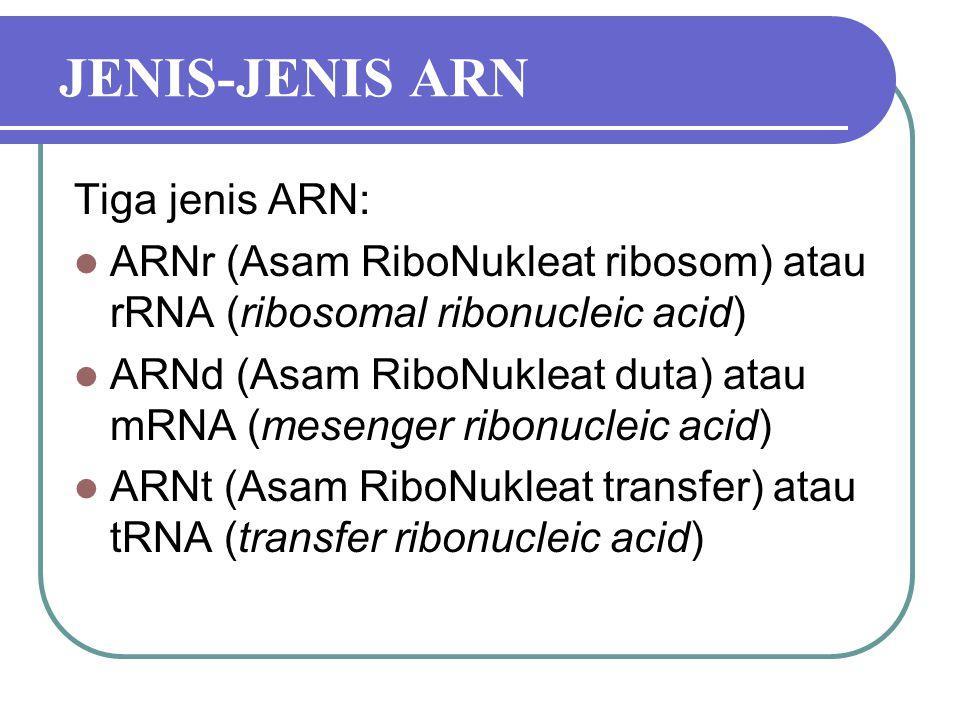 JENIS-JENIS ARN Tiga jenis ARN: ARNr (Asam RiboNukleat ribosom) atau rRNA (ribosomal ribonucleic acid) ARNd (Asam RiboNukleat duta) atau mRNA (mesenger ribonucleic acid) ARNt (Asam RiboNukleat transfer) atau tRNA (transfer ribonucleic acid)