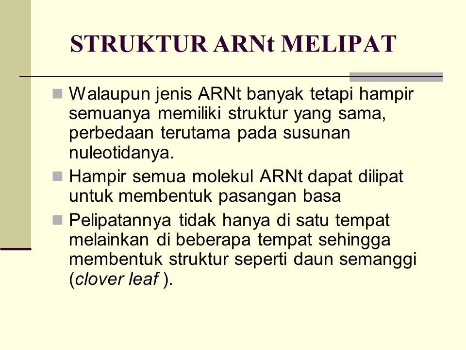 STRUKTUR ARNt MELIPAT Walaupun jenis ARNt banyak tetapi hampir semuanya memiliki struktur yang sama, perbedaan terutama pada susunan nuleotidanya. Ham