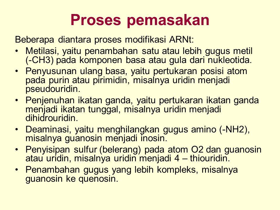 Proses pemasakan Beberapa diantara proses modifikasi ARNt: Metilasi, yaitu penambahan satu atau lebih gugus metil (-CH3) pada komponen basa atau gula dari nukleotida.