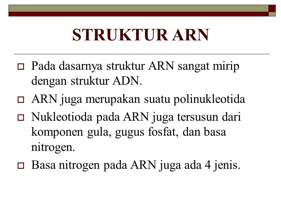 STRUKTUR ARN  Pada dasarnya struktur ARN sangat mirip dengan struktur ADN.  ARN juga merupakan suatu polinukleotida  Nukleotioda pada ARN juga ters