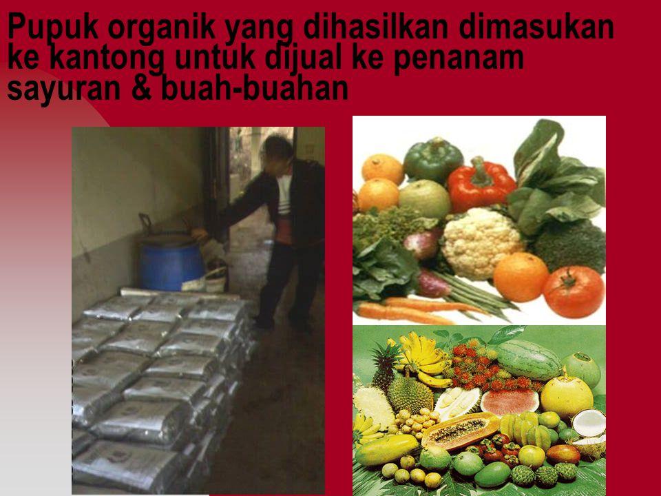 Pupuk organik yang dihasilkan dimasukan ke kantong untuk dijual ke penanam sayuran & buah-buahan