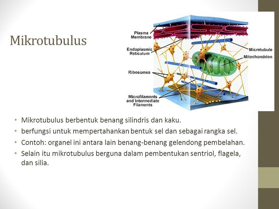 Mikrotubulus Mikrotubulus berbentuk benang silindris dan kaku. berfungsi untuk mempertahankan bentuk sel dan sebagai rangka sel. Contoh: organel ini a