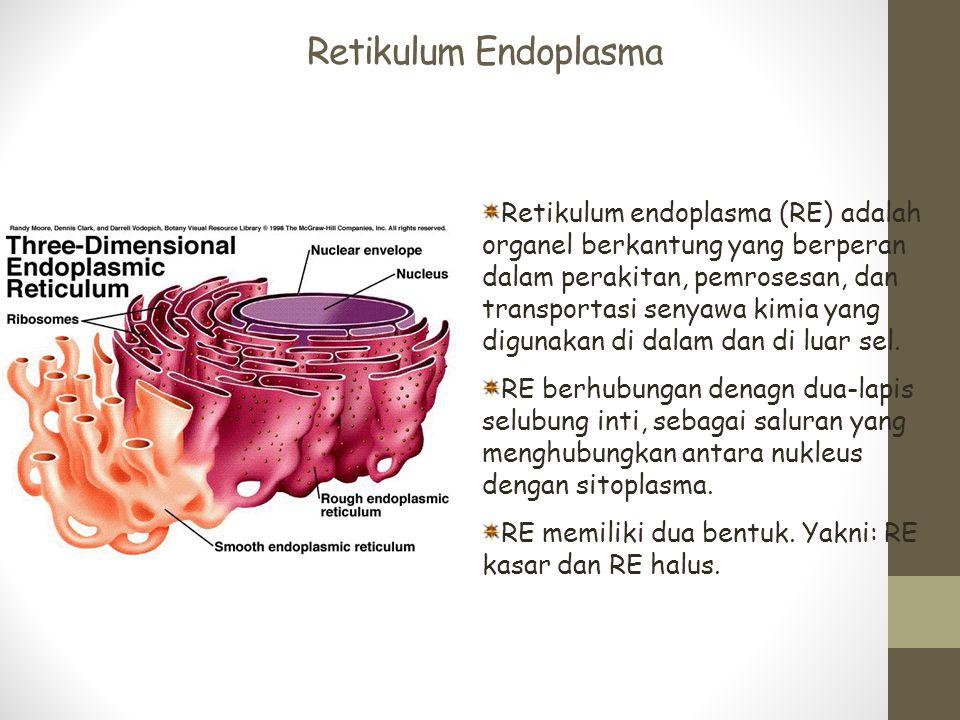 Retikulum Endoplasma Retikulum endoplasma (RE) adalah organel berkantung yang berperan dalam perakitan, pemrosesan, dan transportasi senyawa kimia yan