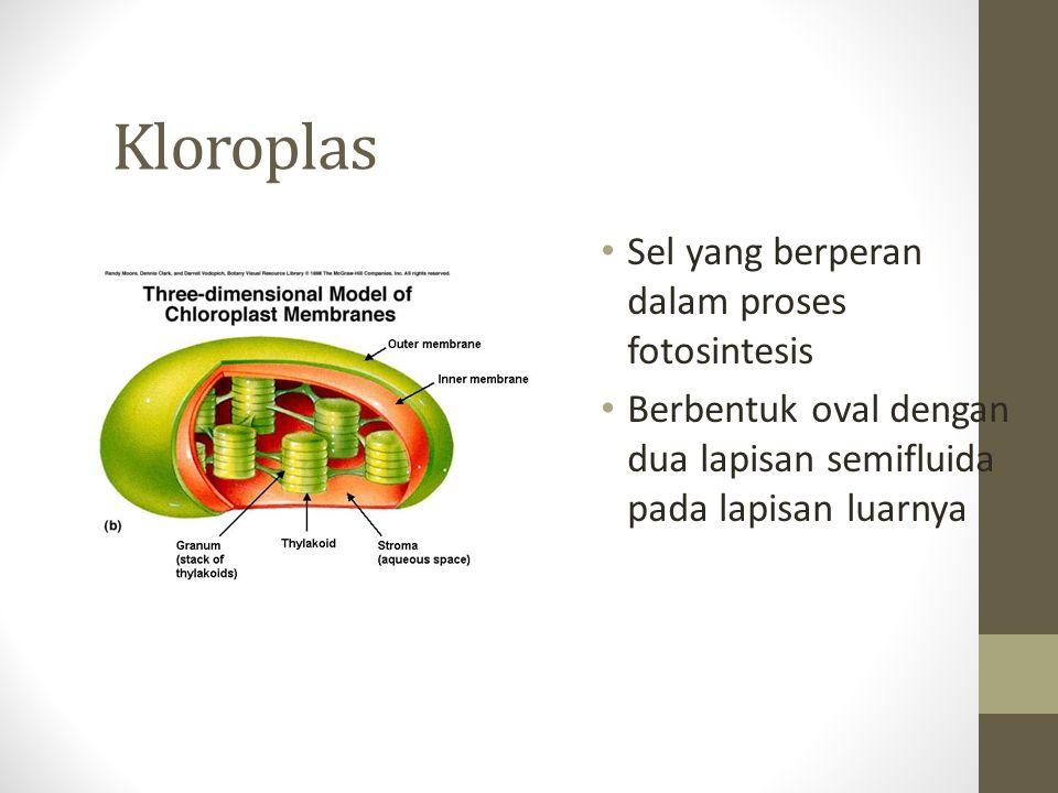 Kloroplas Sel yang berperan dalam proses fotosintesis Berbentuk oval dengan dua lapisan semifluida pada lapisan luarnya