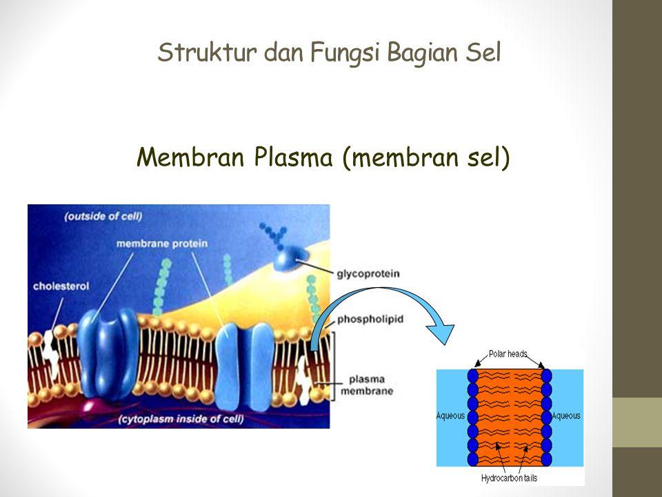 Struktur dan Fungsi Bagian Sel Membran Plasma (membran sel)
